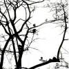 oiseaux-perches
