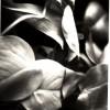 plantegrasse
